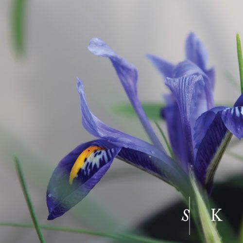 Garden Designer Winter Iris Cornwall
