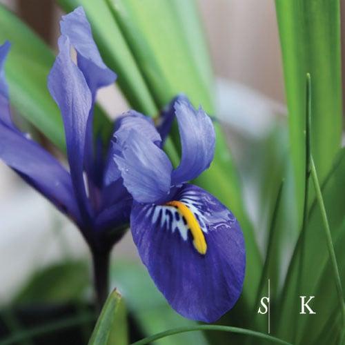 Selma Klophaus Iris Garden Designer Cornwall