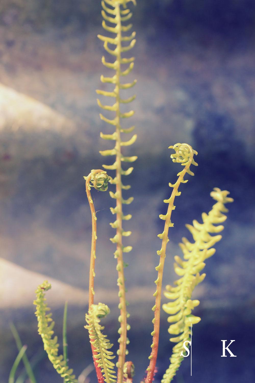 Selma-Klophaus-Garden-Design-fm.jpg