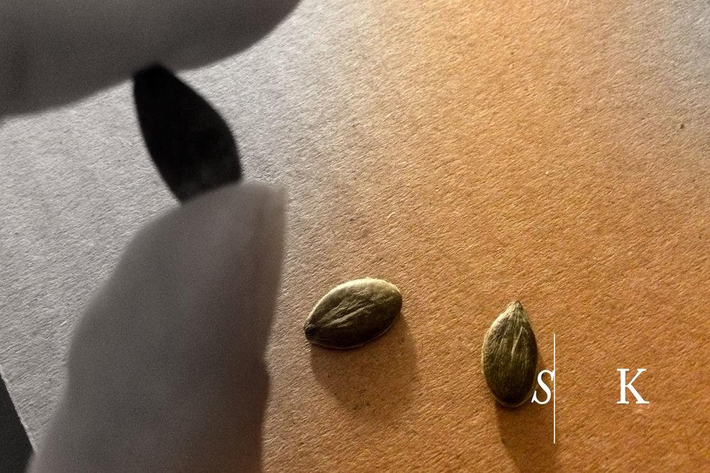 'Uchiki Kuri' seeds
