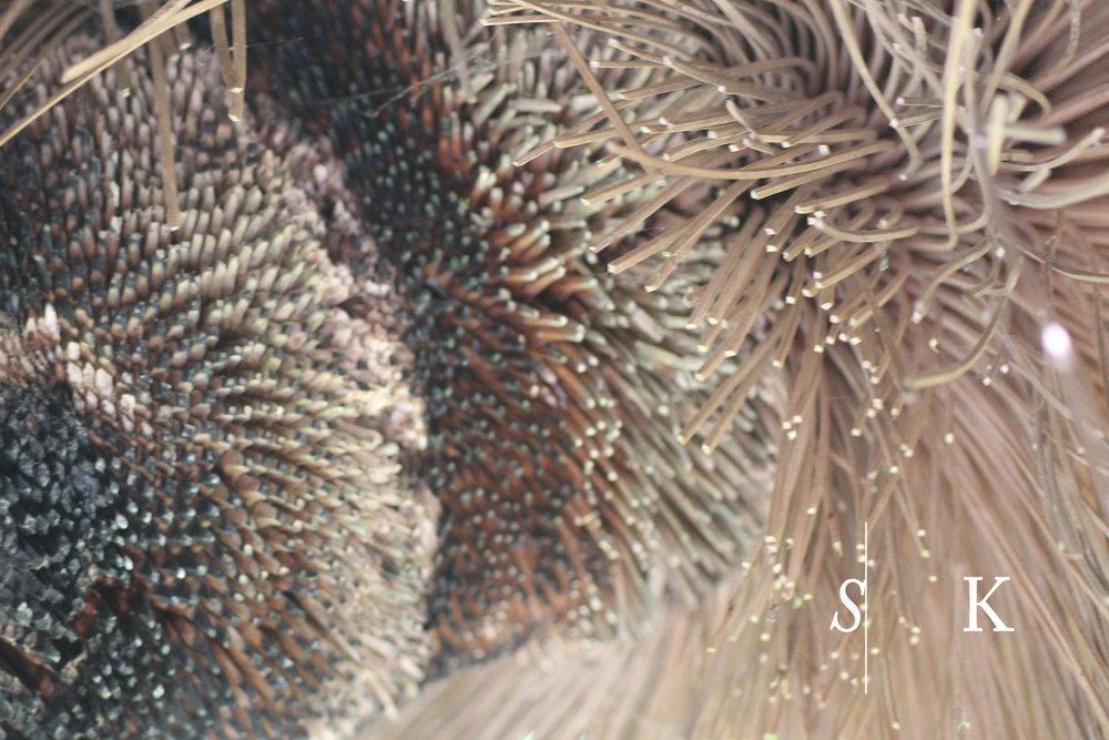 Tremenheere Garden textures