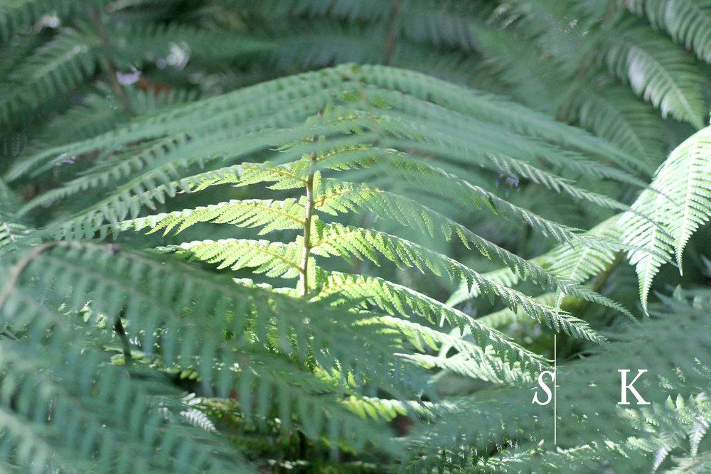Tremenheere Garden