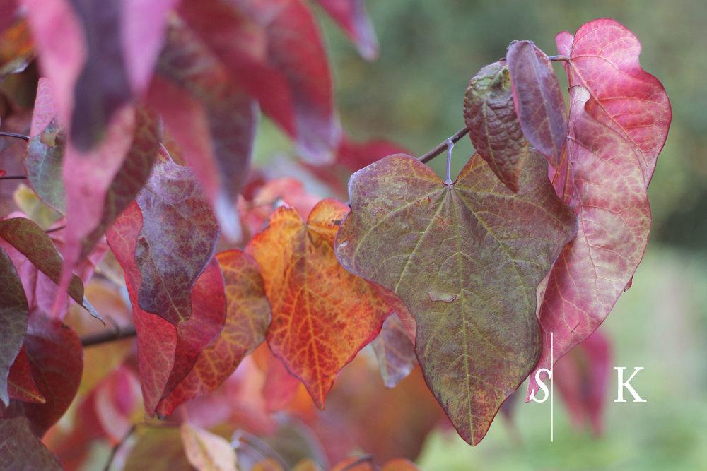 Cornwall Garden Design Colourful Leaves