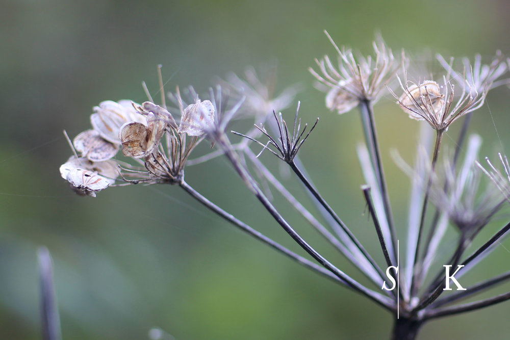 Cornwall Garden Design Seed Heads