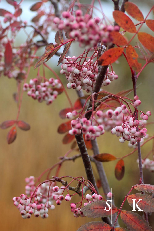 Cotswolds Design Autumn