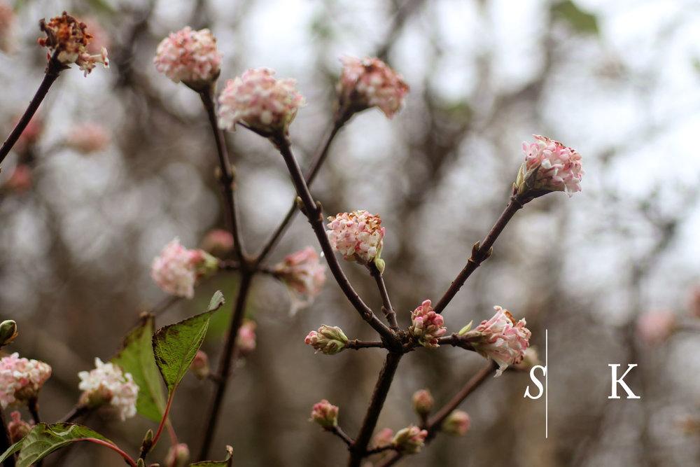 November flowering Shrubs in Cornwall