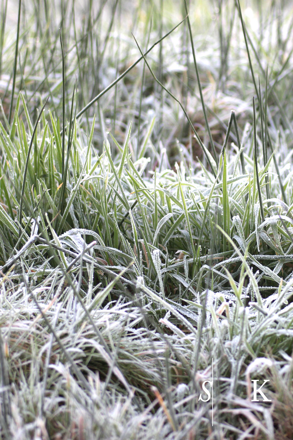 Frosty Morning in Cornwall in November