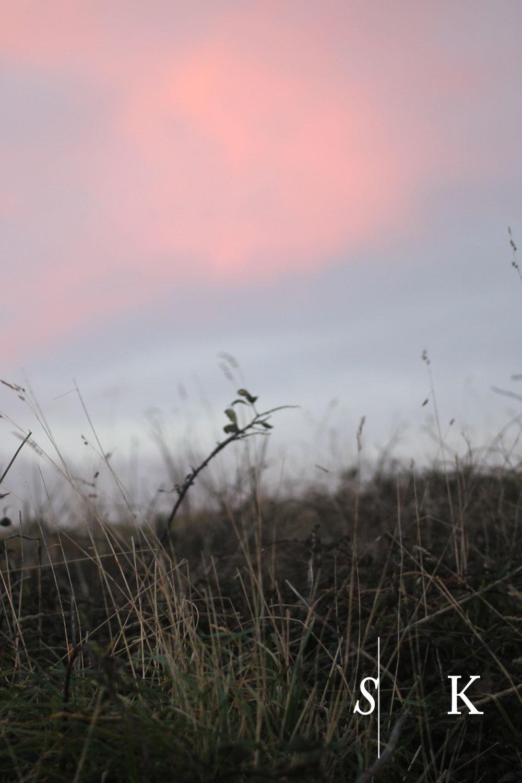 December Meadow