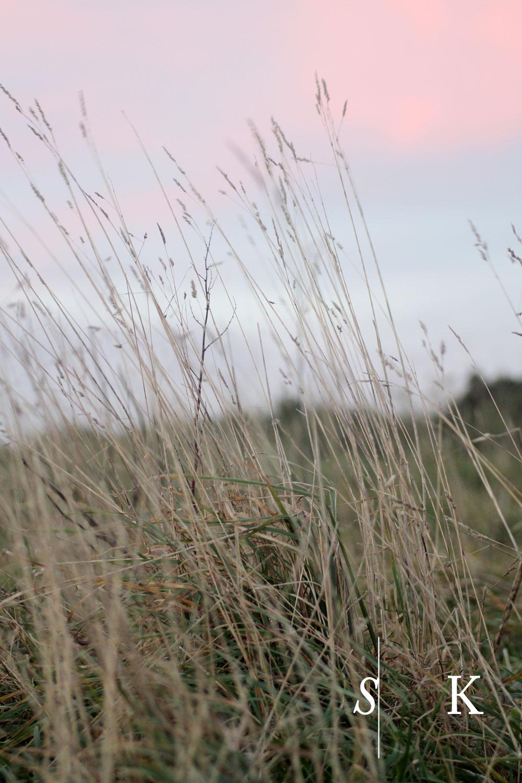 December Meadow in Cornwall