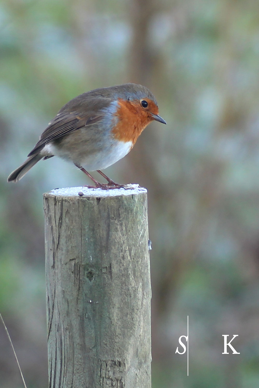 Robin Cornwall