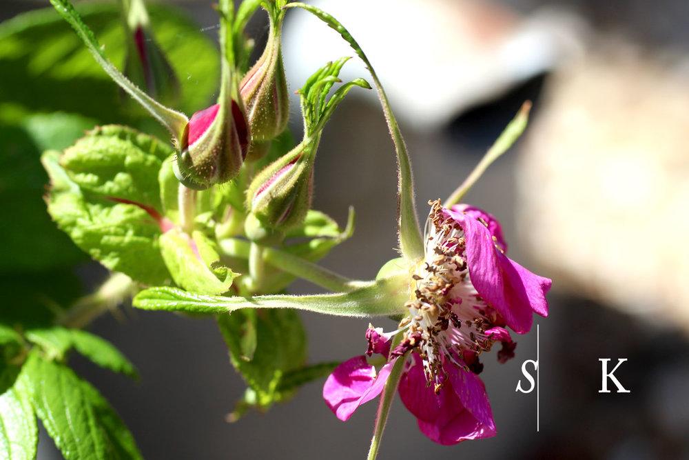 Selma-Garden-Design-Jul3.jpg