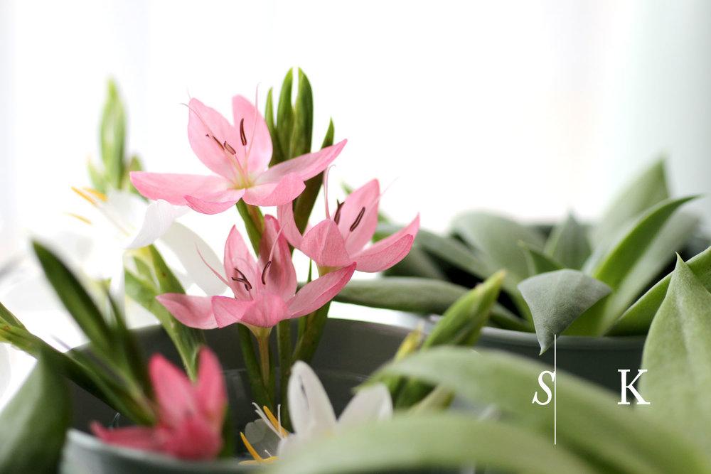 Cut flowers window Hesperantha and Dudleya