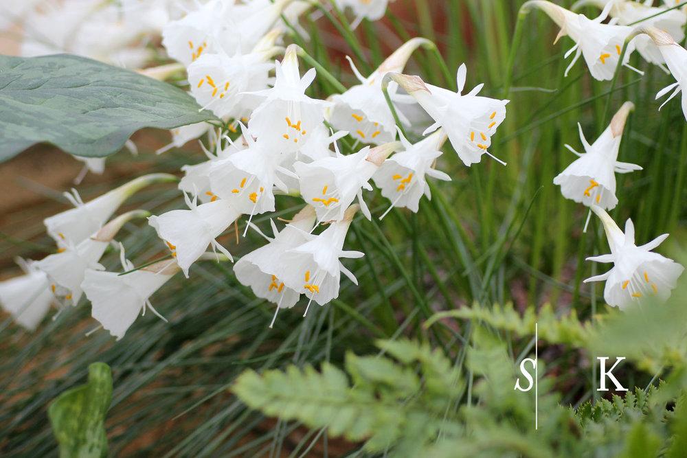 RHS Garden Wisley Selma Klophaus Garden Design