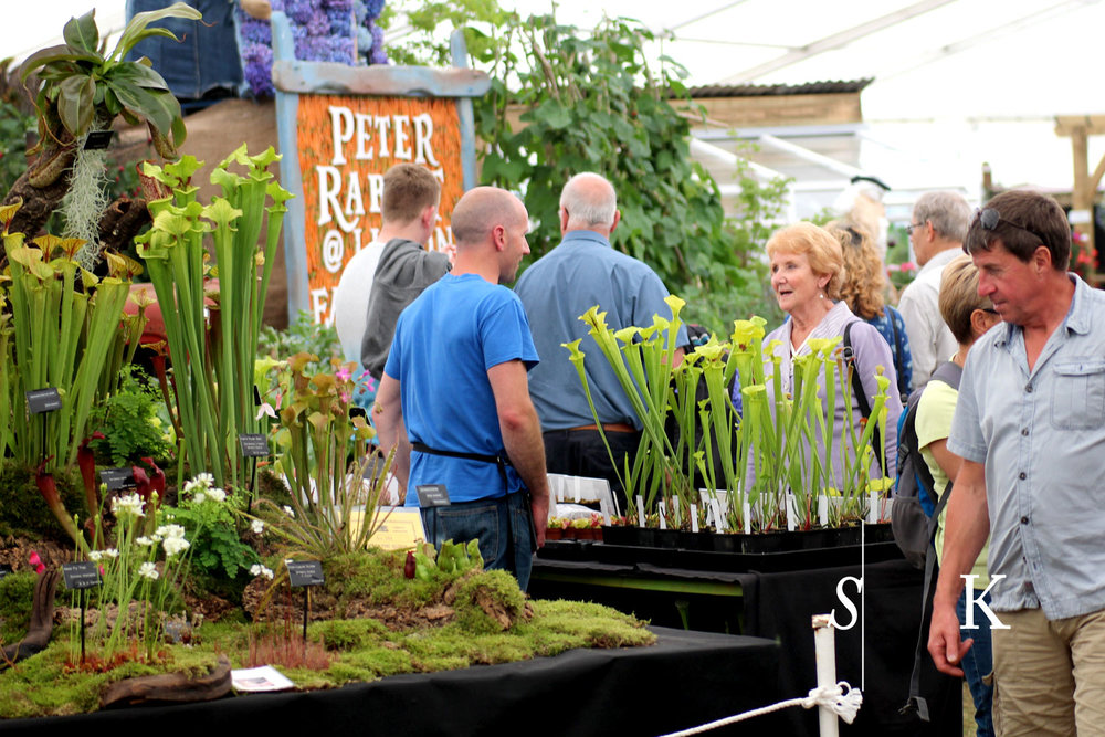 Royal Cornwall Show 2018 Discussing Carnivorous plants