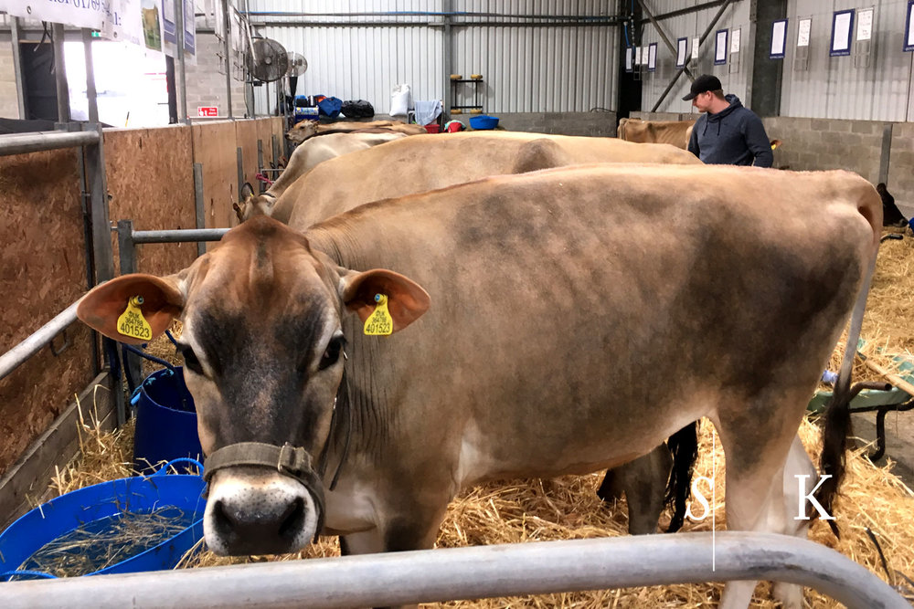 Royal Cornwall Show 2018 Jerseys