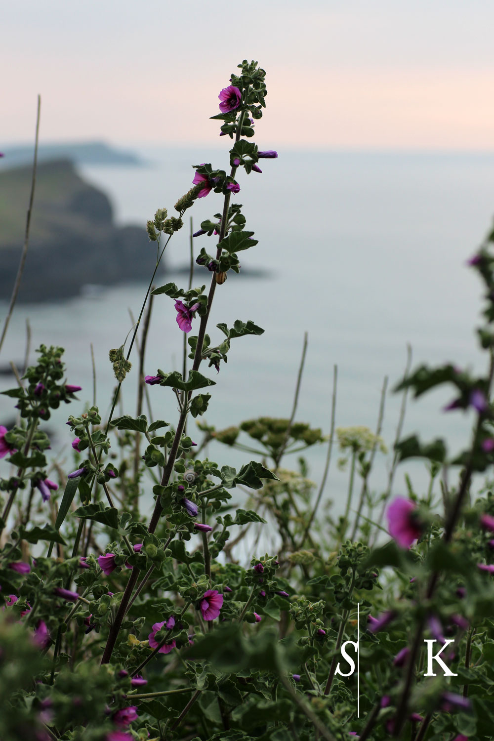 Cliff top plants Cornwall Garden Design
