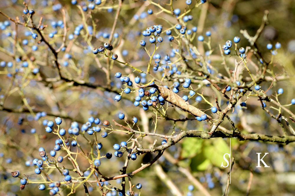 Seeds In October
