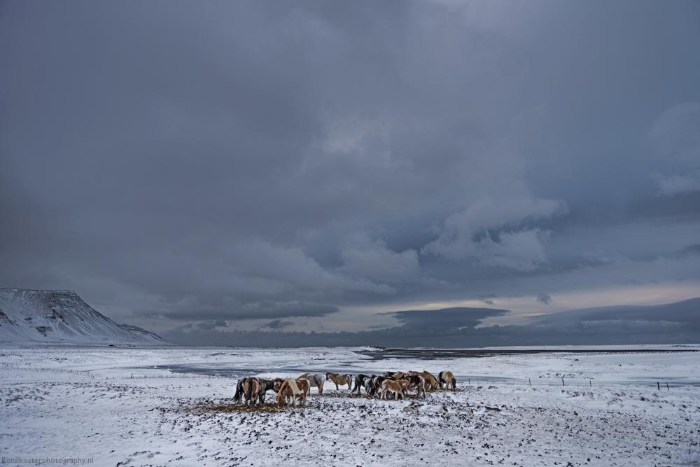 RKP-ICELAND--2518.JPG