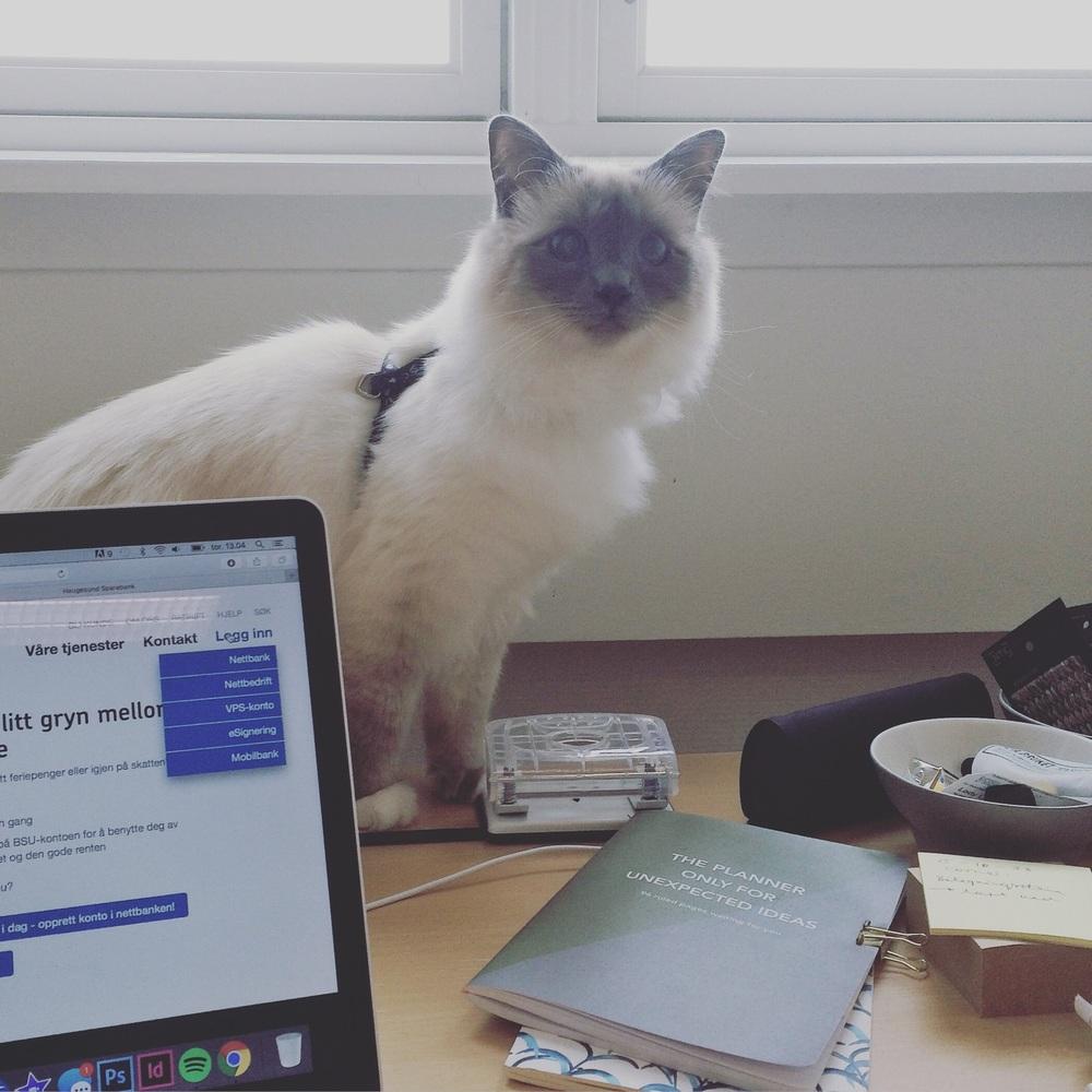 Min lille assistent. Rotet mer enn han hjalp til ...