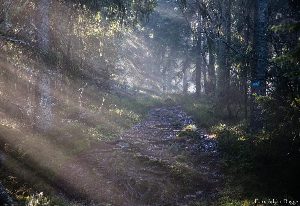 Energihealing og HjerteHealingYoga. Gi deg tid til å stresse ned og dra på en reise i ditt indre.