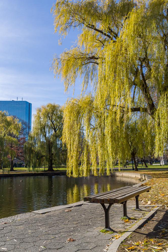 Park Bench Boston Common