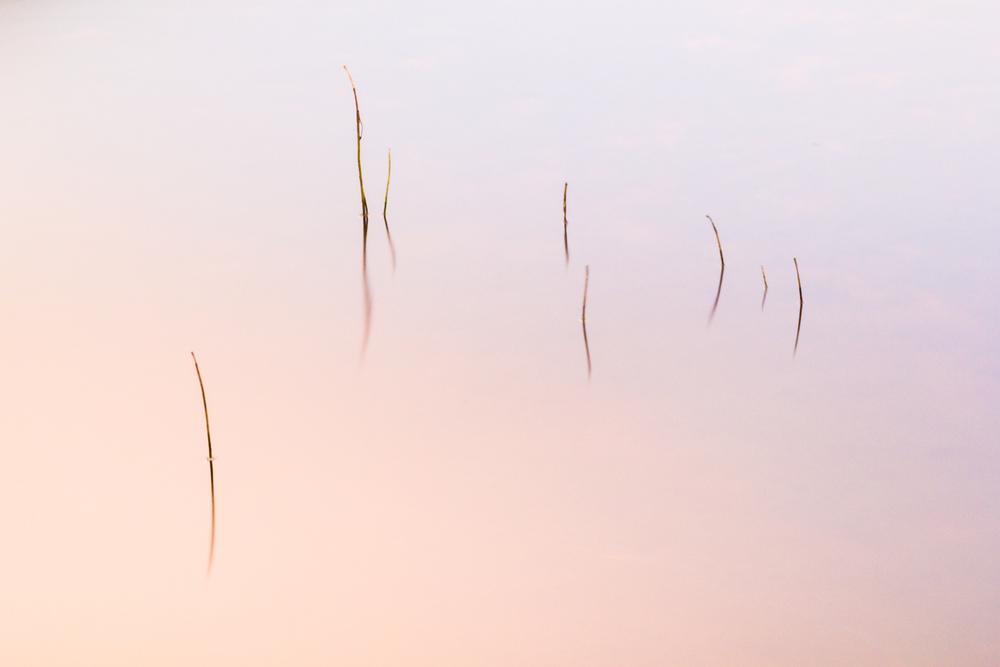 Lough Caragh Reeds