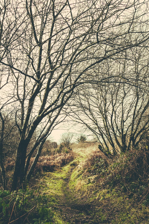 Ballynafagh-Lake__001.jpg