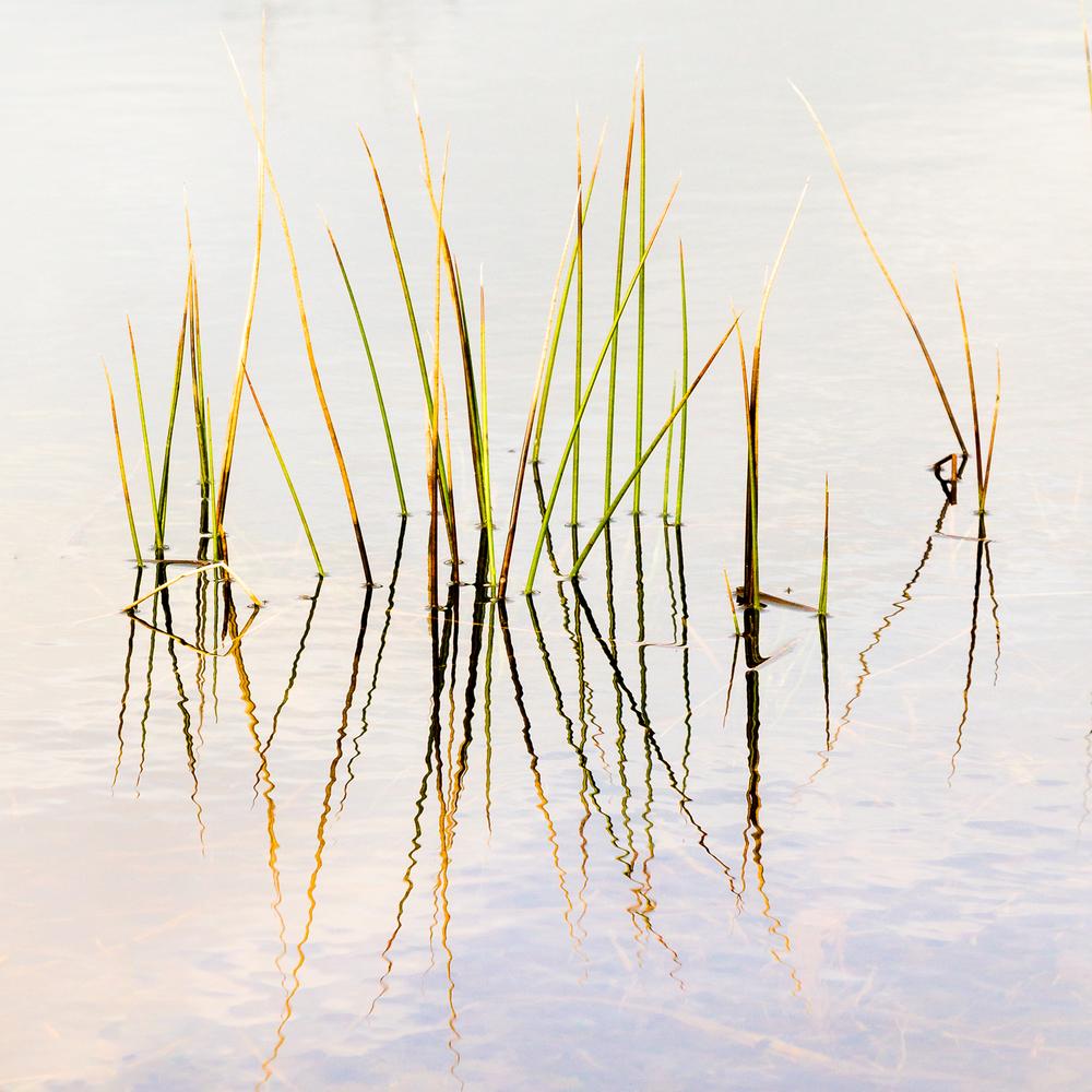 Ballynafagh-Lake__002.jpg
