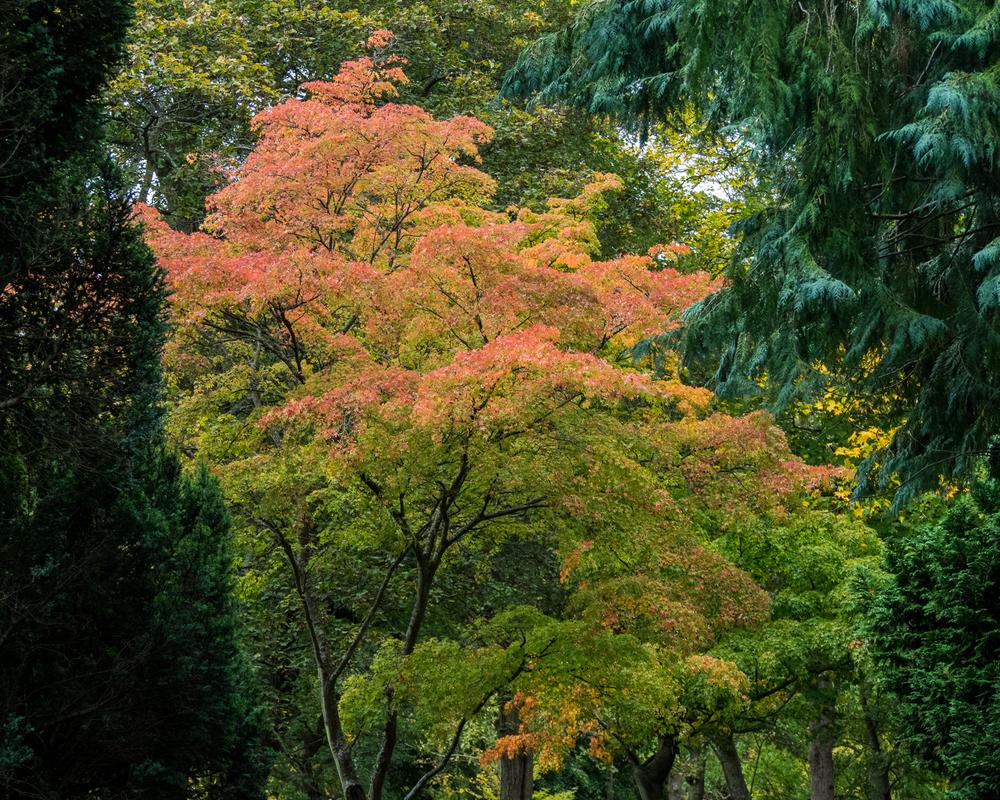 botanical-gardens__003.jpg