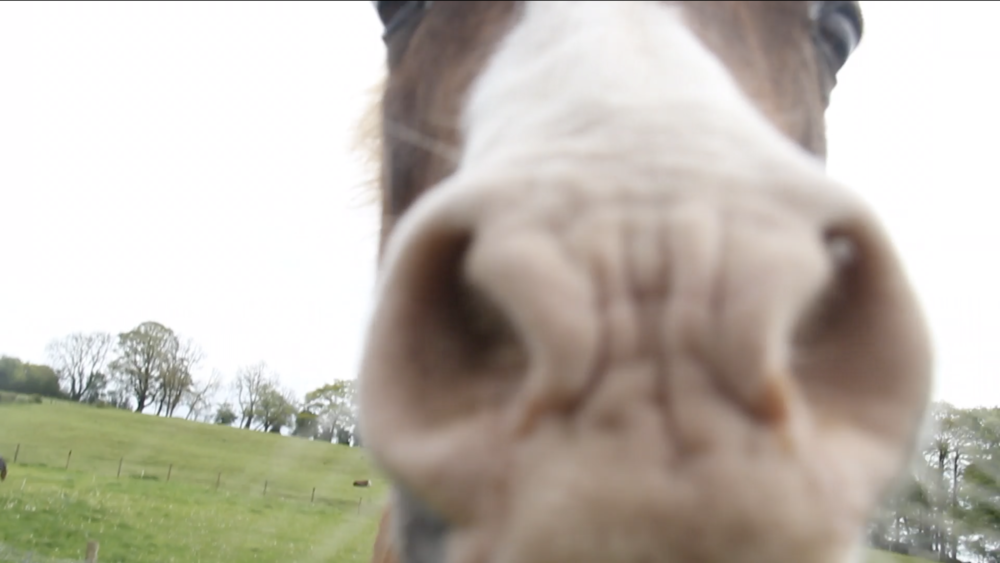 I love horses. Although I have no experience with them, they are like so majestic. But when I came this close with the horse, my camera and I freaked out.