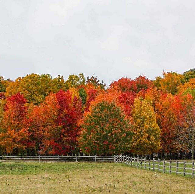 Autumn is officially here! 🍃🌿🍁🍂 • • • • • #fallorvisdays #manchestervermont #dorsetvermont #rupertvermont autumninvermont #vermontfall #vermontfoliage #creativedesignstudio #wanderwherethewifiisweak