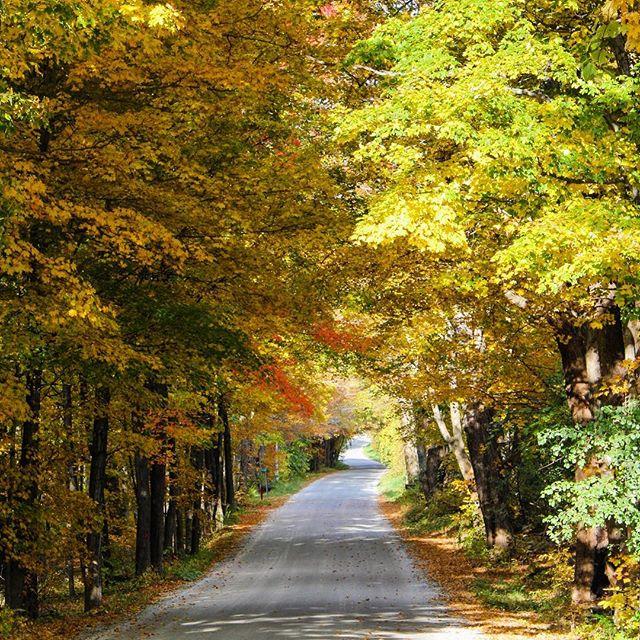 This is why you travel the dirt roads 🍂 • • • • • #wheretofindme #rslove #rsroadtrip #realsimple #verytandc #thatsgoodhousekeeping #travelinsiders#flashesofdelight #theeverygirl #theeverygirltravels #vermont #mynewengland #travelvermont #mytinyatlas #iamatraveler #tlpicks #huffpostgram #forbestravelguide #traveldeeper #seevermont #welovevermont #cltravel #govermont #vermonting #clscenery #goopgo #thisisvt