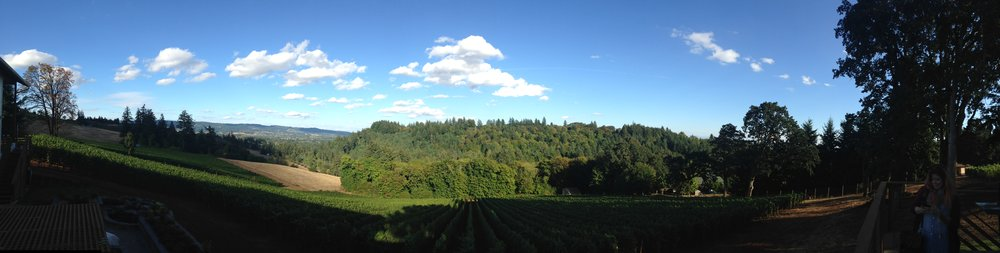 The view from Mo Ayoub's deck/tasting room. Dundee Hills in all its splendor.