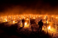 Vineyard fires to ward off frost in the Loire, April 2017