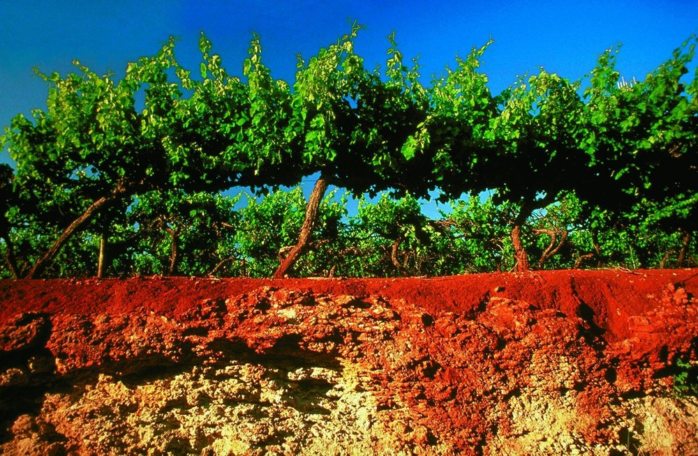 Terra Rosa : the dirt that made Coonawarra famous
