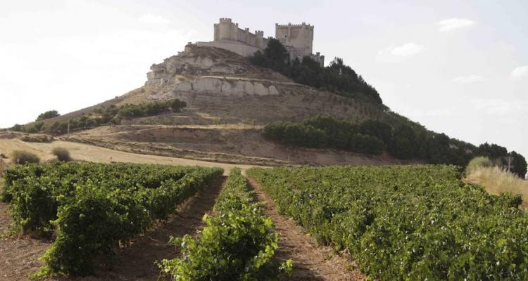 Spanish castle magic in Ribera del Duero. A young wine region, you say?