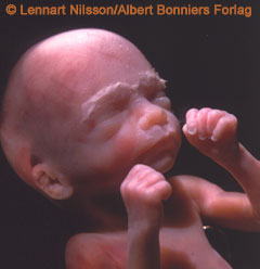 Image courtesy of http://www.google.com/imgres?imgurl=http://www.dshs.state.tx.us/uploadedImages/Content/Family_and_Community_Health/wrtk/develop/22-weeks.jpg&imgrefurl=http://www.dshs.state.tx.us/workarea/linkit.aspx%3Flinkidentifier%3Did%26itemid%3D52252&usg=__HYYKKlcxgMTgyF26n3LWbL7aTc8=&h=248&w=240&sz=11&hl=en&start=0&zoom=1&tbnid=uZj6jqKinhV-oM:&tbnh=162&tbnw=174&ei=-GD7TejAFobi0QGxwYi8BA&prev=/search%3Fq%3Dfetus%2B22%2Bweeks%2Bpictures%26um%3D1%26hl%3Den%26client%3Dsafari%26sa%3DN%26rls%3Den%26biw%3D1128%26bih%3D624%26tbm%3Disch&um=1&itbs=1&iact=hc&vpx=531&vpy=240&dur=479&hovh=198&hovw=192&tx=96&ty=144&page=1&ndsp=15&ved=1t:429,r:7,s:0&biw=1128&bih=624.