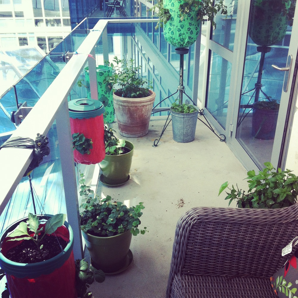 Love Life and Lollipops- Plantings on my terrace