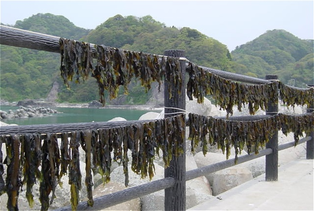 image via http://food.3yen.com/wp-content/images/wakame.jpg