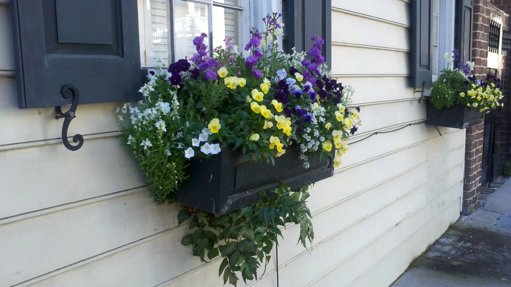 Did I mention the window boxes everywhere?