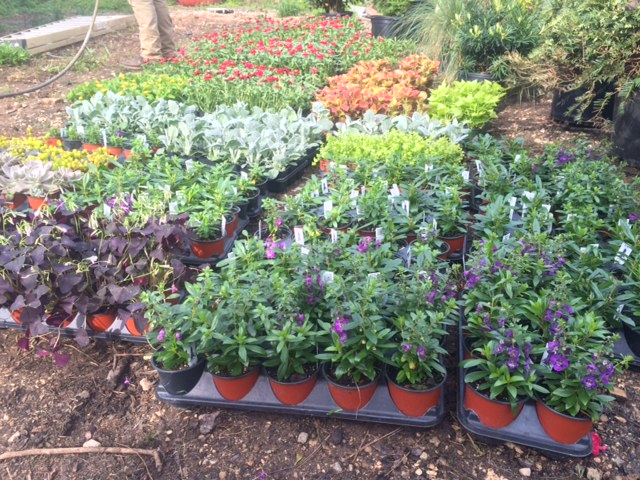 Shout out to our favorite annual and perennial grower, Leatherwood Nursery! They consistently provide us with beautiful, quality plants!