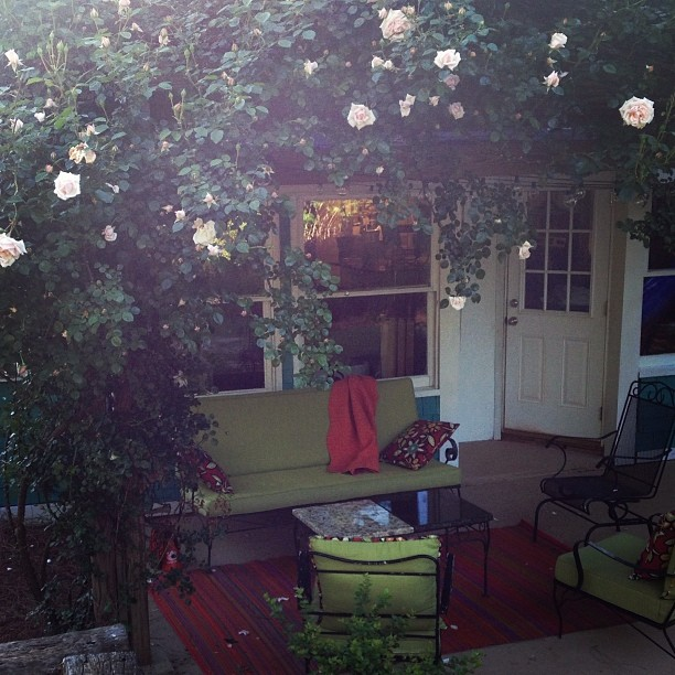 My climbing rose blooming makes me smile because this time last year we were hosting a graduation party for my newest sister-in-law under that rose and getting geared up for the wedding!