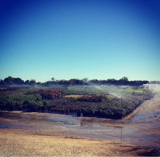 Lots of irrigation at the nursery!