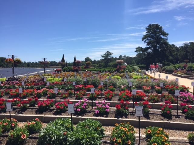 Trial Gardens