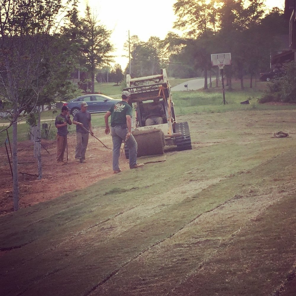 Rolling sod as the sun sets!