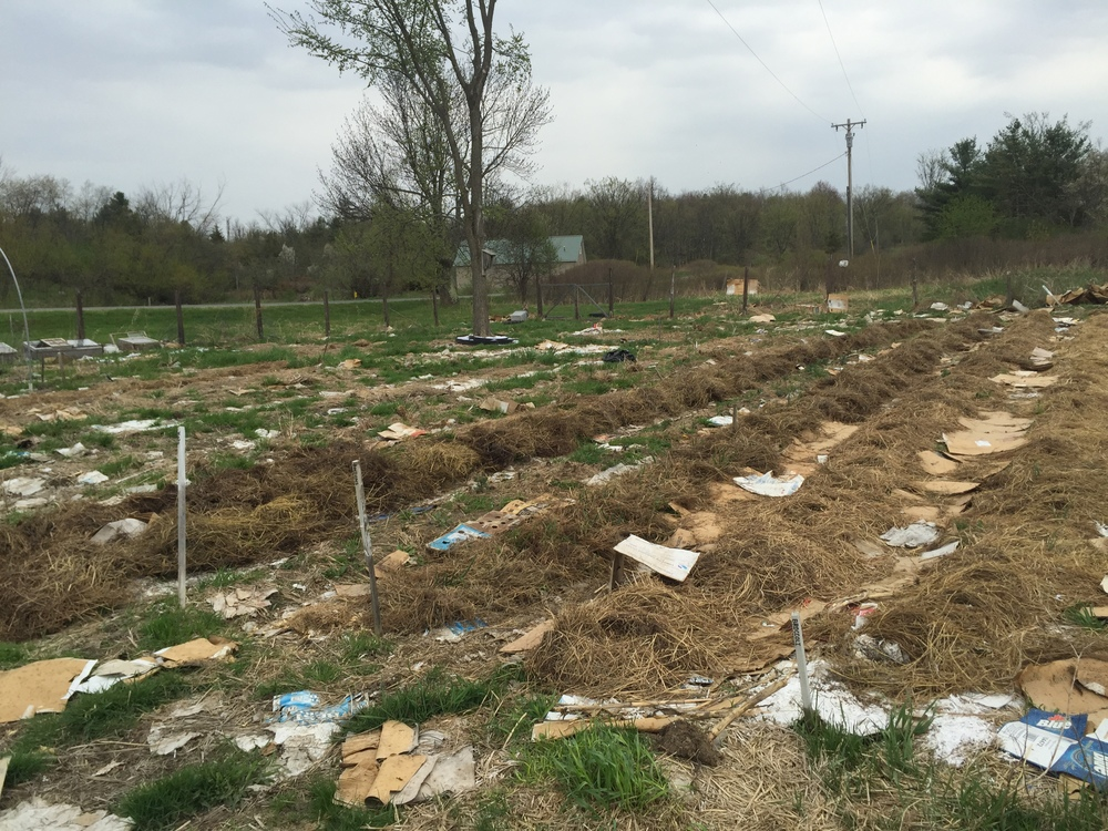 Each spring, we go out again, line between garden rows with cardboard, and add fresh hay, raked-up leaves, tiny twigs and other brown lawn debris to the ...