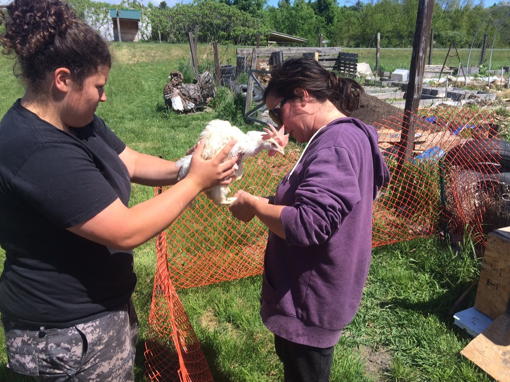 "Kathryn Mollica, left, and Nicole Caldwell clip toenails of ""spent"" hens rescued today from a nearby egg farm."