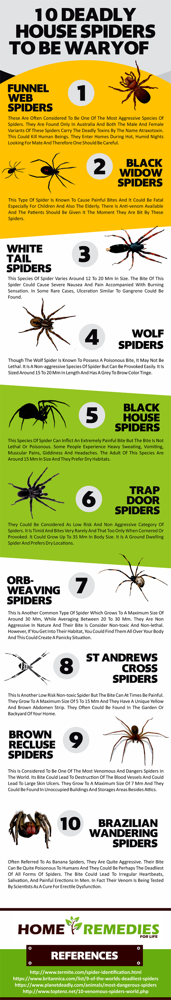 10-deadly-house-spiders.png
