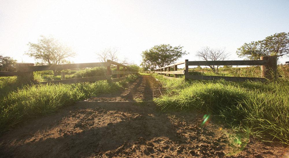 Jurlique_farm_in_Adelaide_Southern-Australia.jpg