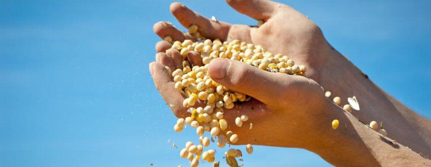 corn_hands.jpg